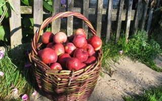 Яблони моего сада советы валерия закотина