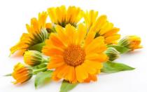 Цветы семенами в открытый грунт