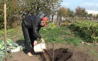 Выясняем благоприятное время для пересадки вишни