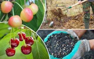 Чем подкормить вишню осенью