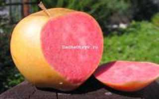 Сорт яблок розовый жемчуг отзывы садоводов фото
