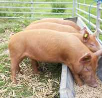Как сделать корыто для свиней из дерева