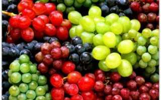 Ранние синие сорта винограда