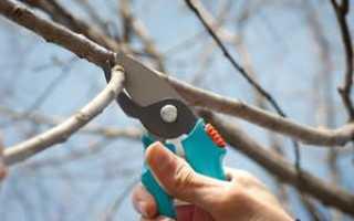 Можно ли обрезать деревья осенью