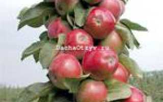 Яблоня триумф описание сорта