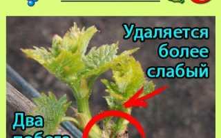 Пасынкование и летние виды обрезки виноградной лозы