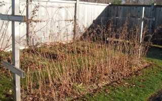 Подкормка малины осенью сроки