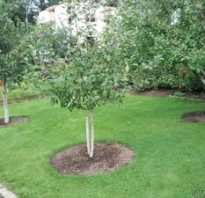 Как правильно посадить плодовые деревья на участке