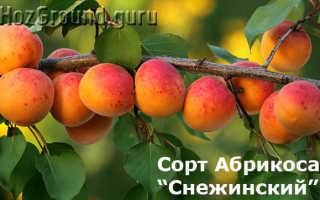 Сорт абрикоса снежинский описание особенности