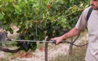 Как обрабатывать виноград до во время и после цветения