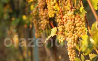 Причины виноградных слез