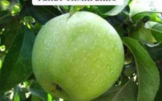 Характеристика яблони семеренко