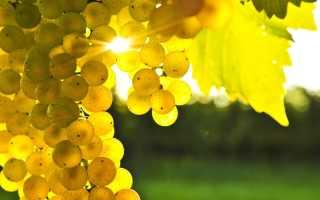 7 самых морозостойких сорта винограда