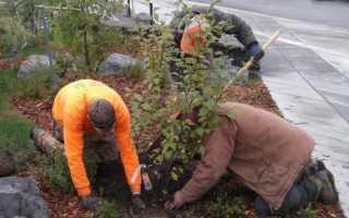 Какие плодовые деревья можно сажать осенью