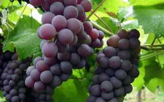 Использование нитроаммофоски для винограда инструкция по применению