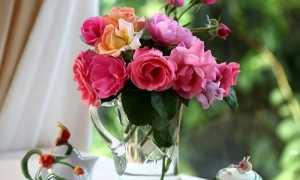 Роза дала росток в вазе как посадить