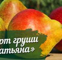 Груша татьяна характеристика сорта и технология выращивания