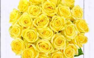 Роза хаммер фото