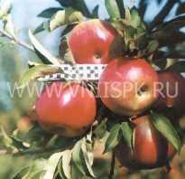 Альдаред яблоки описание
