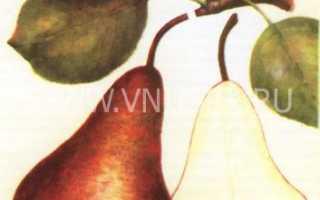 Описание сорта груши бере
