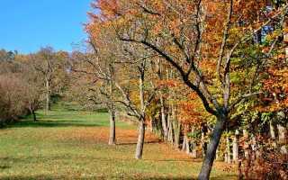 Уход за яблоней осенью обрезка