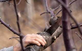 Как ухаживать за деревьями осенью