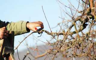 Схемы формирования кроны яблони