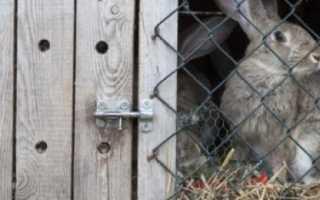 Почему кролики грызут деревянные клетки причины