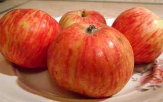 Яблоня конфетное на карликовом подвое