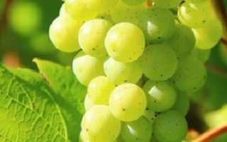 Уход за виноградником в марте