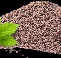 Ежевика семенами размножение и лучшие сорта растений
