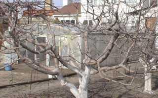 Интересуетесь как омолодить старую яблоню Советы экспертов помогут разобраться