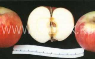 Сорт яблок московская грушовка