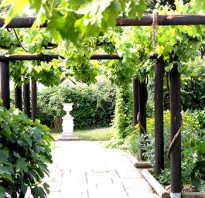 Самостоятельное строительство перголы для винограда