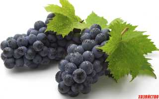Лучшие черные сорта винограда