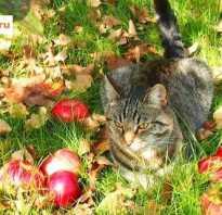 Уход за яблоней весной в подмосковье