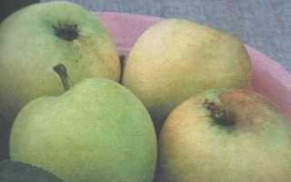 Лучшие сорта яблонь для северо запада