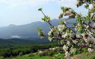Чем лучше подкормить грушу весной