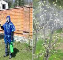 Когда нужно опрыскивать яблони от вредителей