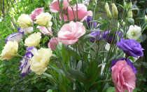 Цветы похожие на розы название и фото