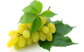О чем говорят светло зеленые листья винограда