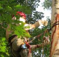 Как пользоваться садовым варом при обрезке деревьев