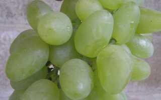 Новые перспективные сорта винограда