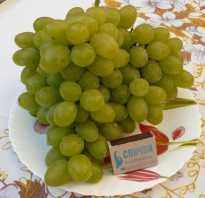 8 лучших сортов винограда 2020 года топ 8