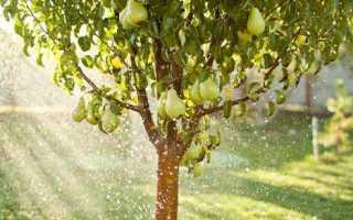 В каком сезоне лучше пересаживать грушу