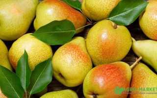 Как правильно сажать колоновидные яблони и груши