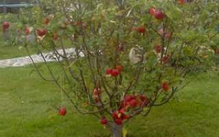 Что можно посадить под яблоней в тени