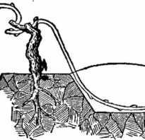 Способы размножения винограда отводками