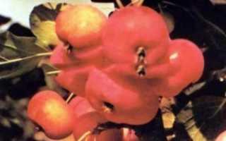 Яблоня малинка описание сорта