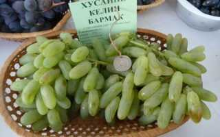 Описание сорта винограда хусайне келим бармак особенности ухода и выращивания